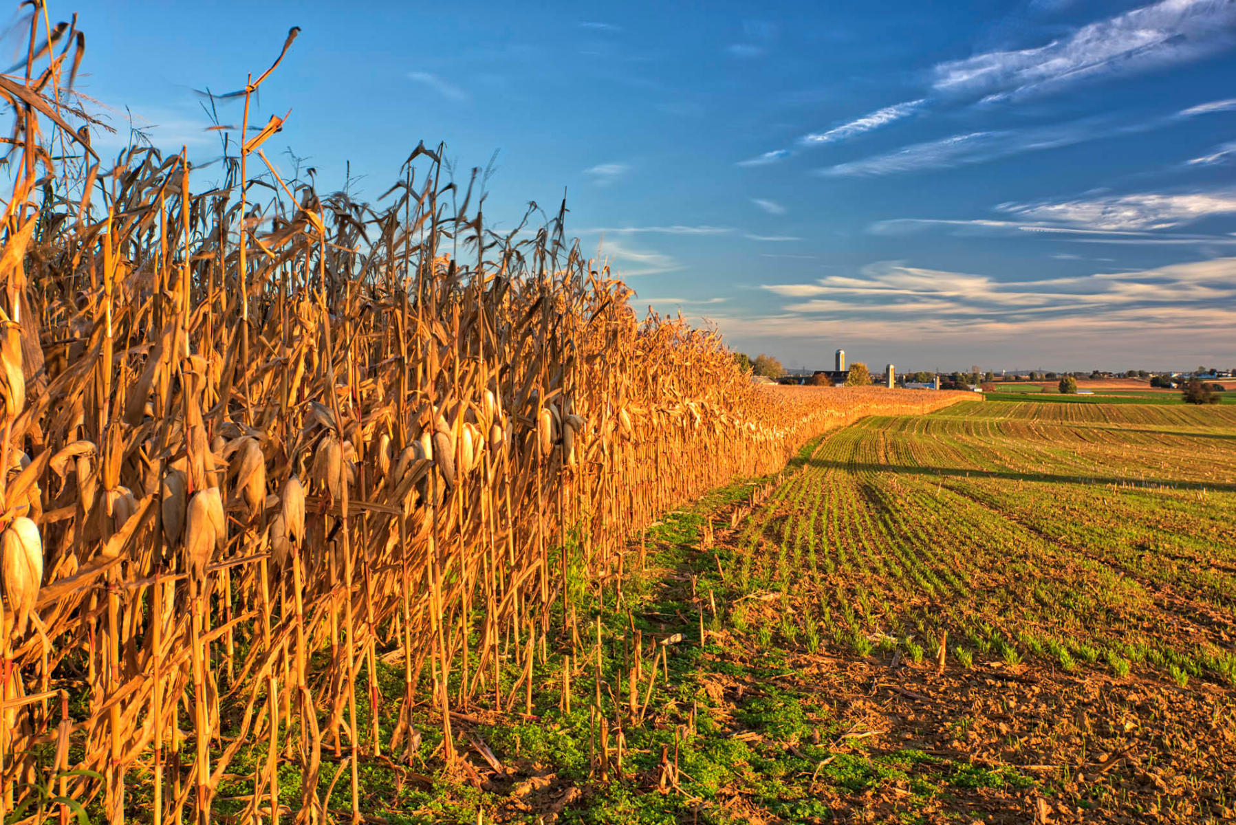 Amish Farms::George Mattei Photography - Healthcare